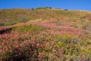 Herfstkleuren op de grond